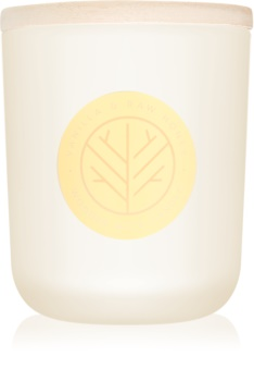 DW Home Vanilla & Raw Honey mirisna svijeća s drvenim fitiljem