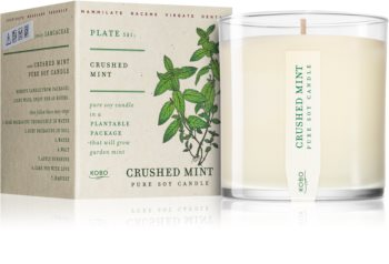 KOBO Plant The Box Crushed Mint scented candle