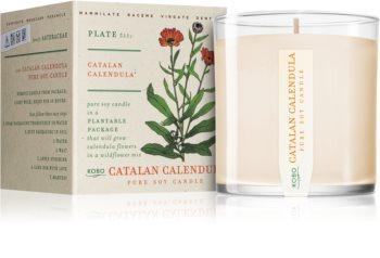 KOBO Plant The Box Catalan Calendula dišeča sveča