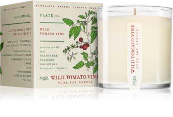 KOBO Plant The Box Wild Tomato Vine bougie parfumée