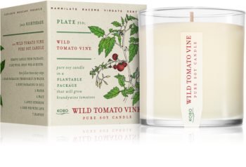 KOBO Plant The Box Wild Tomato Vine Duftkerze