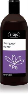 Ziaja Family Shampoo Shampoo für fettiges Haar