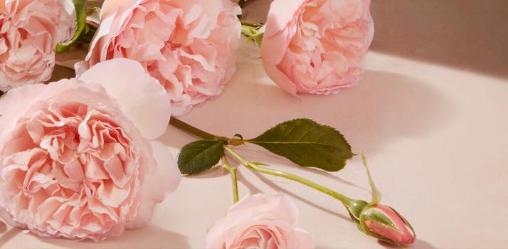 Chloé Rose Tangerine