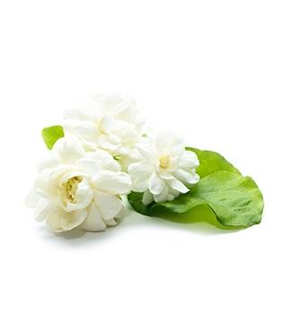 Parfum jasmin