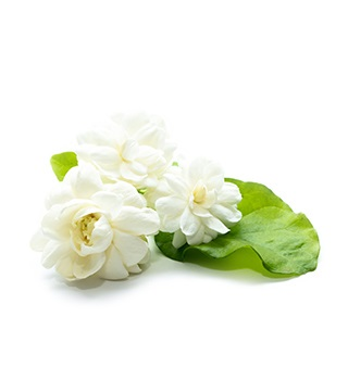 perfume de jazmín
