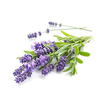 Parfémy s vôňou levandule