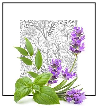 Pánské niche parfémy - aromatická