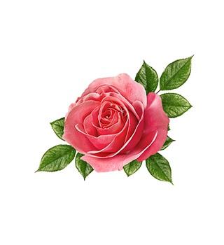 Parfémy s vôňou ruží