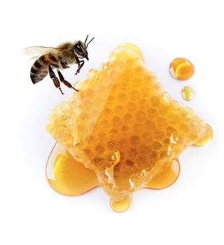 Velas de abelha