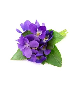 Parfum violette