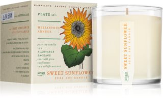 KOBO Plant The Box Sweet Sunflower scented candle