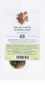 OXALIS Bai He Xian Zi