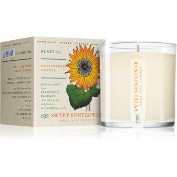 KOBO Plant The Box Sweet Sunflower lumânare parfumată